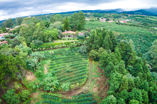 Aerial Photo of House and Coffee Farm
